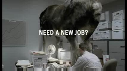 Реклама На Сайт За Работа