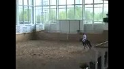 Horses - Задира