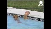Невероятно! Куче Спасява Своето Малко От Удавяне!