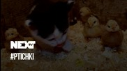 NEXTTV 041: #PTICHKI