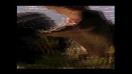 Как се храни крокодила