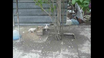 Гълъби (2)