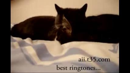 Говорещи (луди) котки