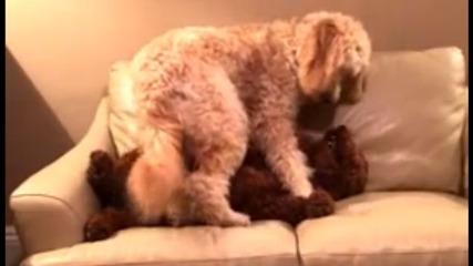 Куче успокоява своя приятел, сънуващ кошмар