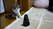 О Колко тъпа котка :d:d 100% Смях