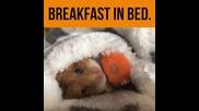 Хамстер яде докато е завит в леглото