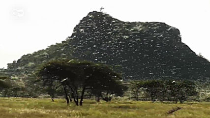Не е филм: невиждана инвазия на скакалци