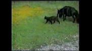 Гинес Рекорди - Най - Малкият Кон На Света
