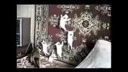 Смешни Котки - Много Смях