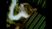 Kotka Spi Nestandartno 5