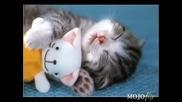 Спящи Сладурчета