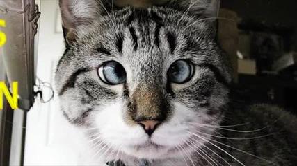 Най - смешните котета на планетата