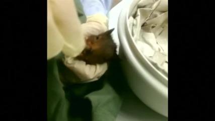 Арестуваха катерица, защото дебнела жена