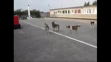 Руски кучета свирят химна на Русия Удивително
