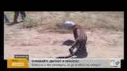 Леопард заклещи главата си в метален съд