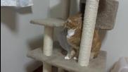 Котка си играе с найлонова торбичка
