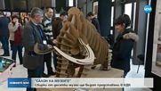 """""""Салон на музеите"""" отваря врати в НДК"""