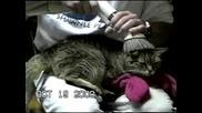 Метод За Почеистване На Котката.flv