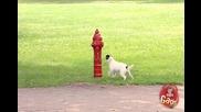 Пожарен кран тормози кучета !