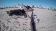 Куче бяга със селфи стик в устата си!
