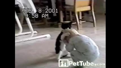 Борба Между Котка И Дете