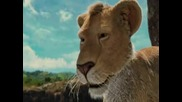 The Wild / Див Живот - Целия филм Бг Аудио 6 Част