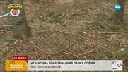 Масова незаконна сеч в Западния парк в София