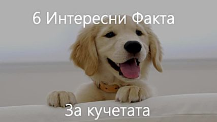 6 Интересни факта за Кучетата