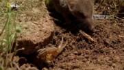 Скорпион срешу Земеровка (бг.аудио)