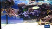 Подводен свят в Музейко