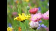 Честита пролет от qpon4est