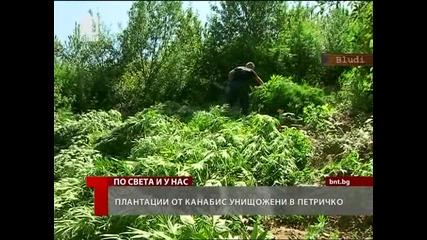 Баби масово гледат марихуана в Петричко