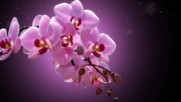 Розови орхидеи ... ( Eugen Doga music) ...