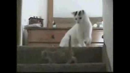 Котки Си Играят
