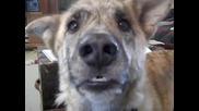 Удивителен монтаж! Куче говори супер реално!