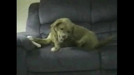 Лудото Куче
