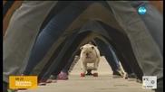 Куче влезе в Книгата на рекордите, карайки скейтборд