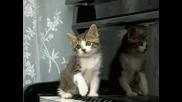 Най - сладките малки котета