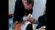 Neuma Hybrid Electric Module Mokata tattoo