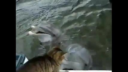 Адски сладко.котка и делфин играят заедно.