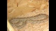 Снимки На Змии