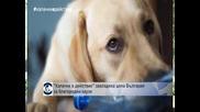 Капачки в действие завладяха цяла България за благородни каузи