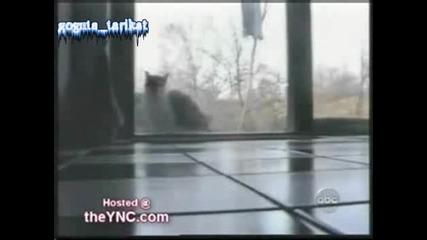 Луди Котки И Много Смях