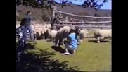 Овчи Репортаж