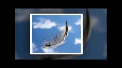Момчето, птицата и нощта - Панайот Панайотов