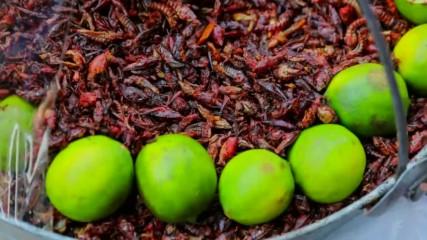 Едно на всеки пет живи същества е бръмбар (