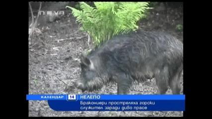 Нова телевизия - Новини - Инциденти - Простреляха горски