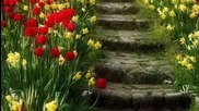Пролет Петя Дубарова