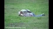 Озлобена Птица