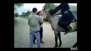 Поразително падане от кон!!!